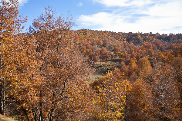 fotos de la precordillera de la araucania de tito alarcon habitando el paisaje