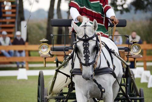 Campeonato Nacional de encganche en Osorno identidadyfuturo.cl 23 y 25 de enero de 2015