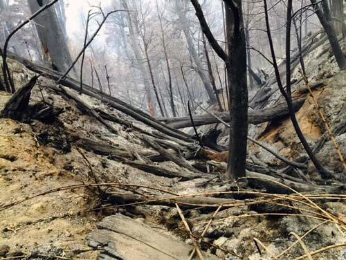 incendio forestal en china muerta conguillio identidadyfuturo.cl