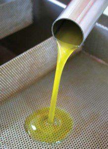 sagra de la oliva chile