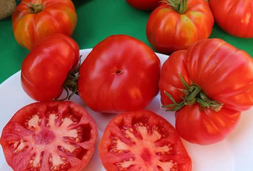 En Olmué Recuperan Antigua Tradición: Niño Dios de las Palmas Bendice Primera Cosecha del Tomate Limachino