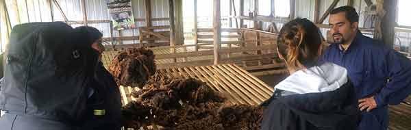 Banco de Lanas: Tejedoras tendrán Materia Prima de Calidad y a Precio Justo durante todo el año
