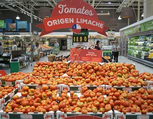 Tomate limachino es comercializado en supermercados de Santiago después de 40 años