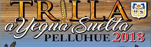 Trilla a Yegua Suelta en Pelluhue