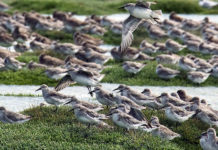 Consejo de Ministros aprueba declaración de Humedal Bahía Lomas como Santuario de la Naturaleza